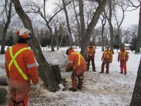 Chainsaw Safety Certification Course - Oct 9, 2015