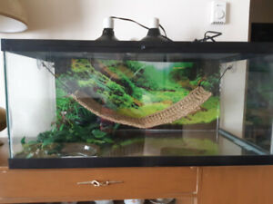 Large terrarium and accessories (Was my Beardie's home)