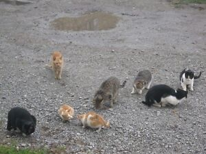 FOUND! DOZENS OF LOST CATS: MAYBE YOURS?