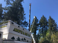 Certified Utility Arborist CUA wanted