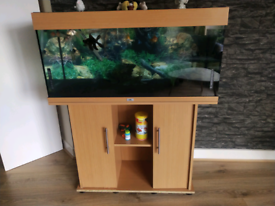 Fish Aquarium Tank 200 Litre with lovely Gold Fishes