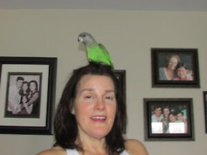 Brown Head Parrot lost  May 20, 2017 from home in Ste. Genevieve
