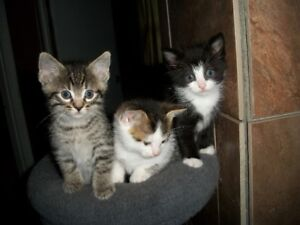 Adorable kittens ready :)
