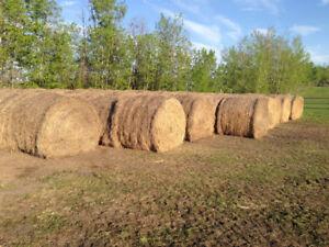 200+ round bales - $50 each West Edmonton