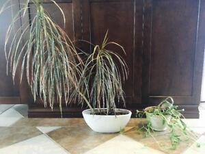 2 plantes dans des pots pour 15$
