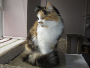Urgent need for a cat sitter Peterborough Peterborough Area image 1