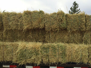 Yukon Grown Oat Hay