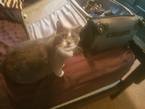 Free Cat to a good home!