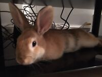 Male rabbit 🐰