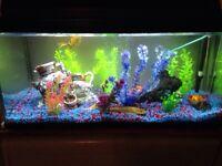 45 Gallon Fish Tank for sale!!!