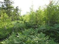 great 100 acre lot for a hunting camp or cottage off the grid