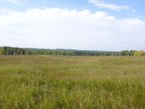 Real Estate-Undeveloped Land-Edson, AB-Unreserved Auction