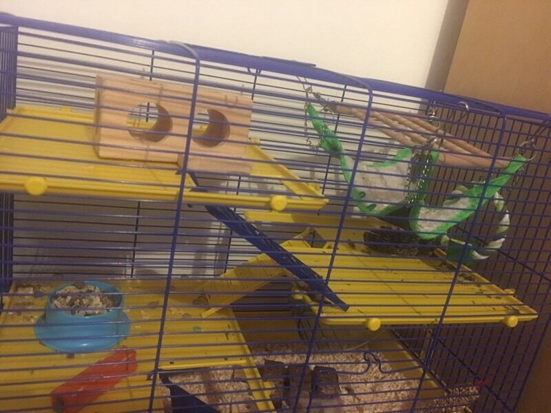 Hamster cage (hamster not included)