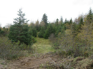 PRIME 4 ACRES ZONED COMM/LIGHT INDUSTRIAL HOLYROOD ACCESS ROAD St. John's Newfoundland image 9