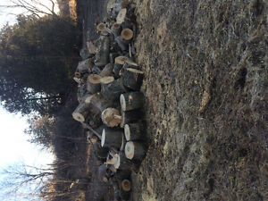 Softwood for sale