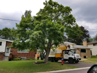AFM Pro Tree Cuttting Services
