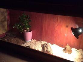 Wooden Lizard tank/vivarium