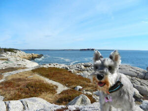 Looking for pet-friendly house or apartment to rent near Amherst