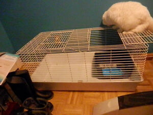 Ferret cage, food and accessories for sale