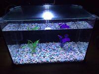 Full set up 28L fish tank