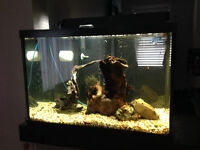 20 gallon fish tank with fish, everything needed, plus more