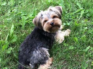 Lost Dog In Edson