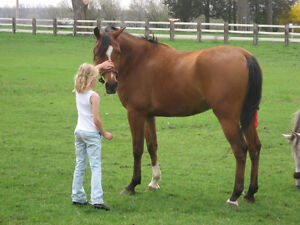 Searching for longterm board - easy keeping friendly Gelding