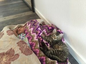 Scratching post (full size $200 2 month ago) - comes with cat! Prince George British Columbia image 3