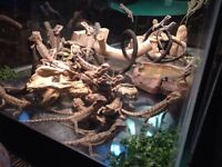 Reptile Rescue Looking For Unwanted Pets