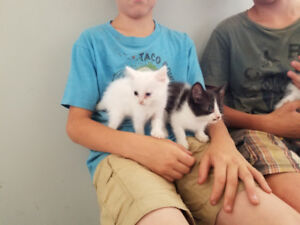 3 Little kittens for sale
