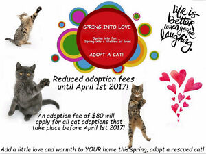 Spring into Love - Adopt a Cat!