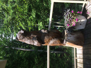 7 foot tall carved bear