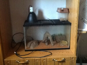 Leopard gecko must go comes with tank