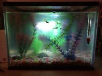 Small Tropical Fish Tank Setup with Fish £25 ovno