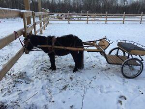 voiture et attelage pour cheval miniature