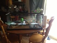 Terrarium with heat pad for sale