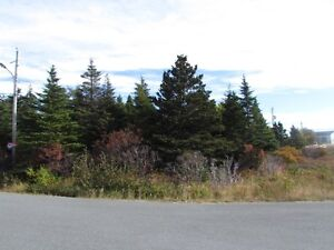 Large private treed lot , Witless Bay 25 mins to city ! St. John's Newfoundland image 3