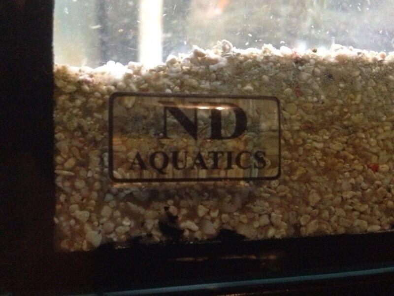 Red Belly Piranha Fish Tank Tropical Aquarium Tank 7 Red Belly Piranha United Kingdom Gumtree
