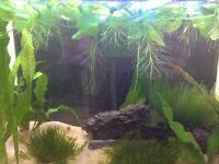 Live Aquarium Plants £5