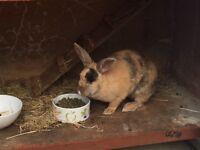 Very friendly rabbit