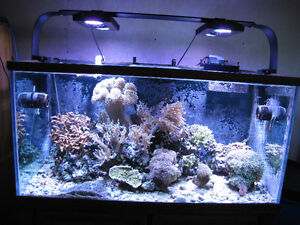 Reef Aquarium Reduced - Livestock sold - Equipment for sale