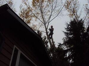 TREE SERVICE  REMOVALS & PRUNING (780) 421-8282 Edmonton Edmonton Area image 10