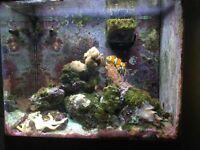 Red Sea max 130d aquarium