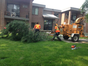 TOP NOTCH TREE SERVICE !!TREE REMOVAL 50% OFF STUMP GRINDING!! London Ontario image 5