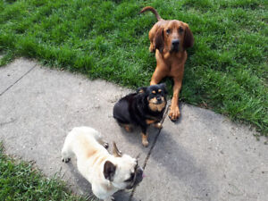 Dog daycare/boarding in our home, LG & SM dogs welcome. North