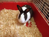 2 female mixed Rabbits to Rehome