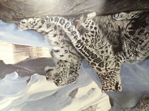 Watchful Eye - Snow Leopard - Terry Isaac Strathcona County Edmonton Area image 5