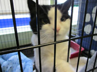 Sweety is a 9 year cat available to good home