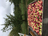 Apple Pickers Wanted - Starting Sept 1st!