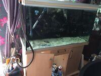 Rena fish tank 4ft